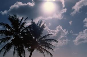 空 ヤシの木の写真素材 [FYI01338420]