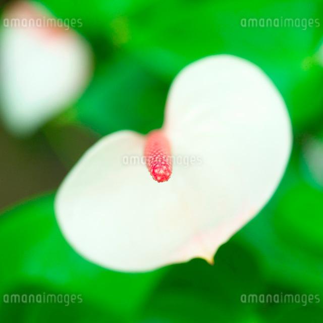 カラーの写真素材 [FYI01338804]