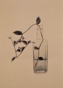 花瓶に生けた花の写真素材 [FYI01338976]