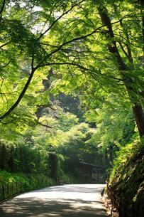 奥の細道中尊寺の写真素材 [FYI01339396]