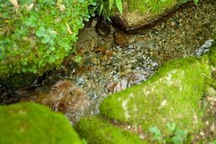 流れる清水の写真素材 [FYI01339426]