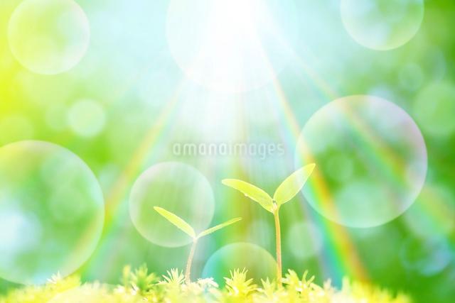 二葉と太陽の写真素材 [FYI01339931]