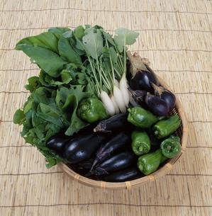 夏野菜の写真素材 [FYI01339979]