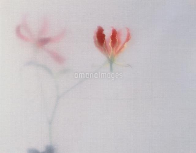 花の写真素材 [FYI01340308]