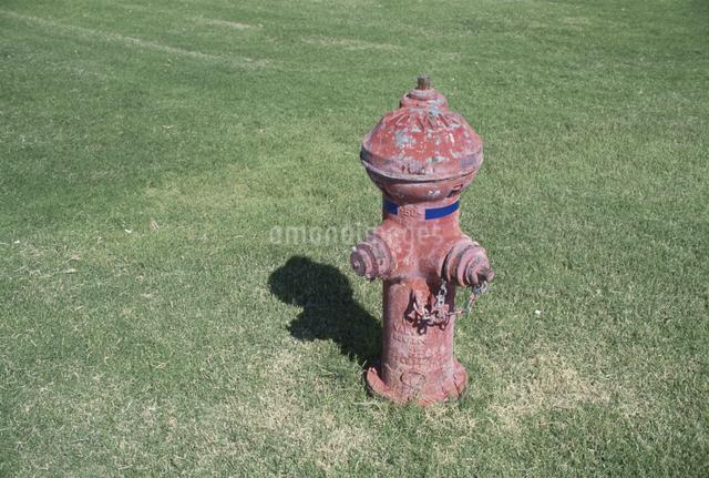 消火栓と芝生の写真素材 [FYI01341930]