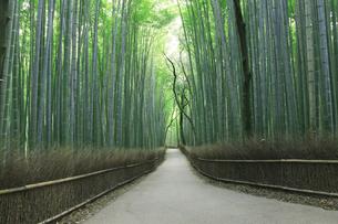 京都の竹林の写真素材 [FYI01341960]