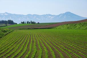 十勝岳連峰と丘の春の写真素材 [FYI01342483]