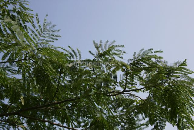 緑の葉がついた葉の写真素材 [FYI01343023]