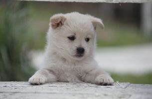 子犬の写真素材 [FYI01343316]