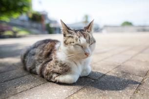 猫のお昼寝の写真素材 [FYI01343530]