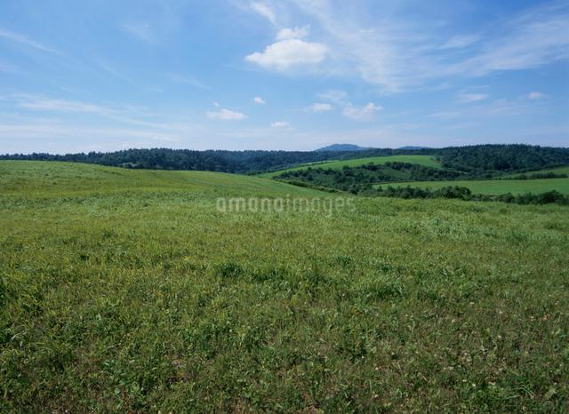 青空と丘の写真素材 [FYI01344663]