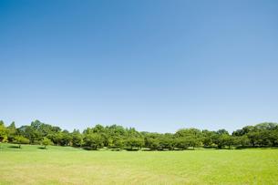 青空と芝生の公園の写真素材 [FYI01344756]