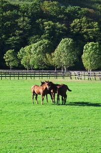 馬の写真素材 [FYI01344845]