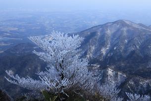 御在所の樹氷の写真素材 [FYI01344859]