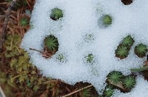 雪解けの写真素材 [FYI01345787]