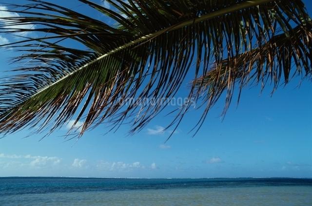 ヤシの木 空 海の写真素材 [FYI01346298]