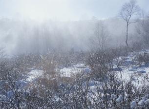 冬の霧が峰の写真素材 [FYI01346764]