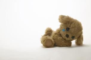 涙を流す犬のぬいぐるみの写真素材 [FYI01346812]