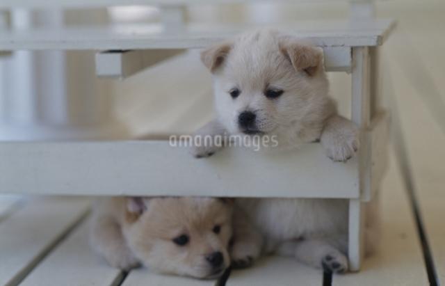 デッキの子犬の写真素材 [FYI01347212]