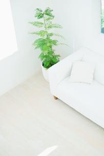 観葉植物とソファのあるインテリアの写真素材 [FYI01347215]