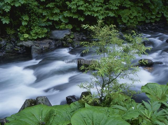 新緑と川の写真素材 [FYI01347488]