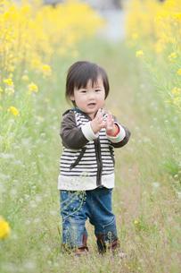 菜の花畑の男の子の写真素材 [FYI01347920]