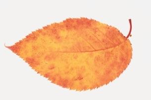 葉の写真素材 [FYI01349397]