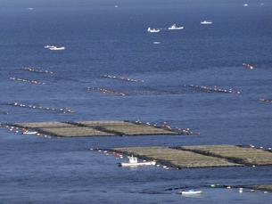 播磨灘の筏の写真素材 [FYI01349949]