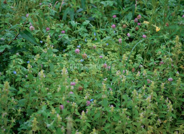 霧雨と草花の写真素材 [FYI01350254]
