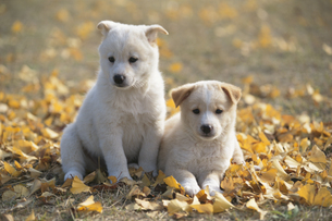 雑種の小犬の写真素材 [FYI01350369]