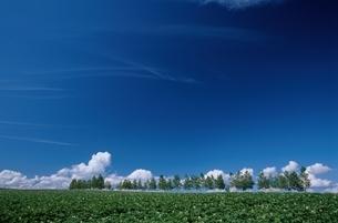 空 雲 野原 木々の写真素材 [FYI01350430]