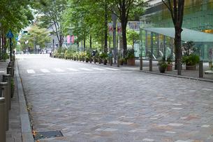 石畳のブティックのある道と並木の写真素材 [FYI01350946]