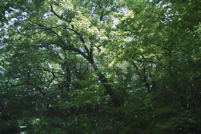 樹木の写真素材 [FYI01351409]