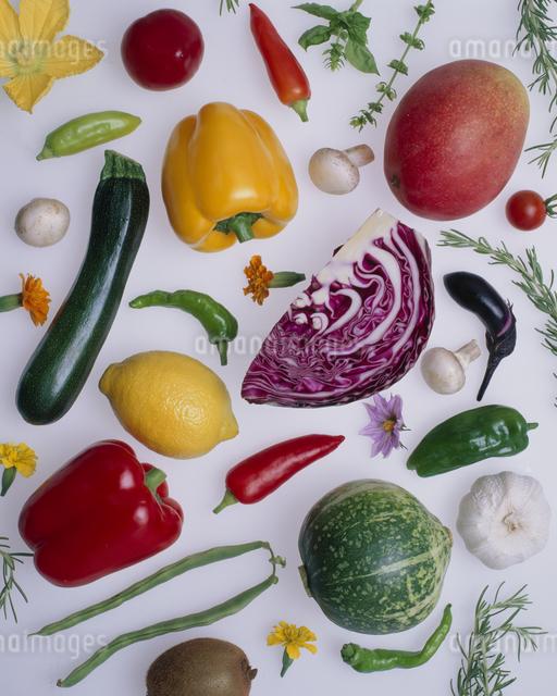 フルーツ・野菜の写真素材 [FYI01351423]
