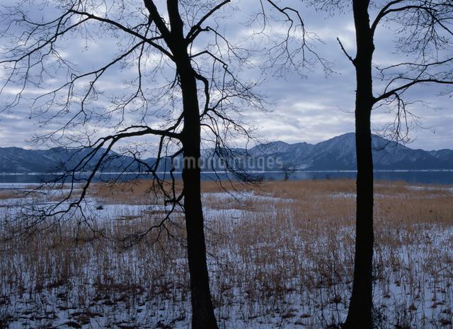 枯れ木と田沢湖の写真素材 [FYI01351735]