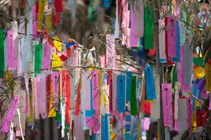 機物神社七夕祭りの写真素材 [FYI01351752]
