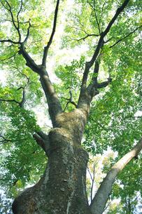 木の写真素材 [FYI01352139]