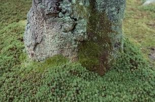 岩 苔の写真素材 [FYI01352190]