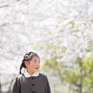 桜並木の幼稚園児の写真素材 [FYI01352251]