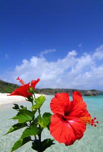 ハイビスカスと海の写真素材 [FYI01353099]