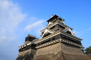 熊本城天守閣の写真素材 [FYI01354447]