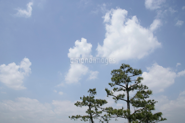 木と青空の写真素材 [FYI01354507]