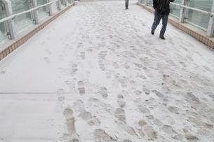 雪の上の足跡の写真素材 [FYI01354578]