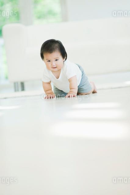 ハイハイする赤ちゃんの写真素材 [FYI01354897]