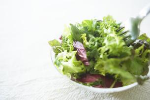 グリーンサラダの写真素材 [FYI01355413]