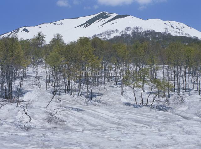 冬の湯殿山の写真素材 [FYI01355437]