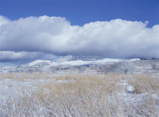 冬の霧が峰の写真素材 [FYI01355746]