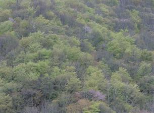 新緑の山の写真素材 [FYI01356369]