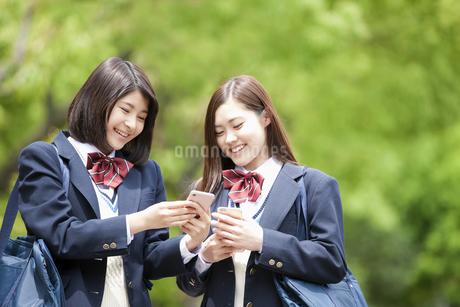 スマートフォンを見ている女子高生2人の写真素材 [FYI01356603]