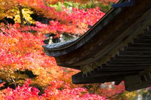 三千院の紅葉の写真素材 [FYI01356824]